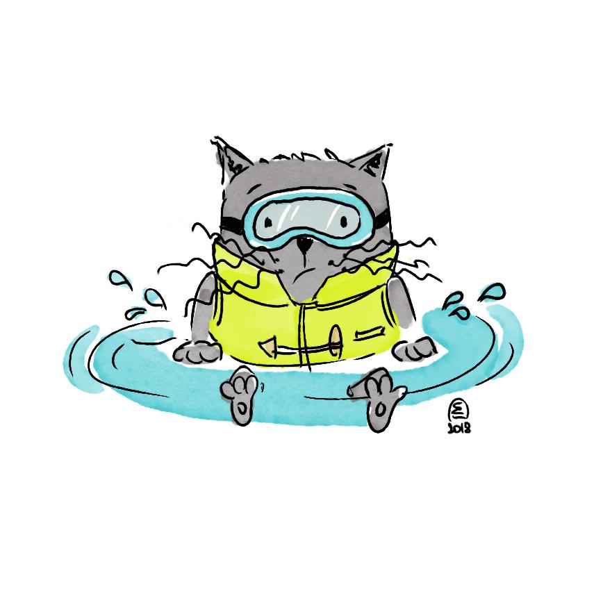 Illustration jeunesse chat eau humour